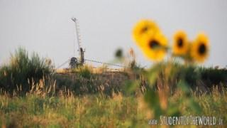Coal Excavator with sunflowers