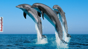 bottlenose dolphins fun facts