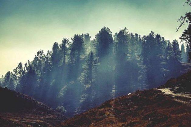 Nathia_Gali_Trees