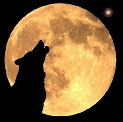 El Lobo Los lobos pert.. Animales -
