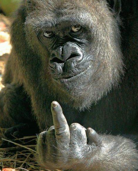 Los Monos En la siguie.. Animales -