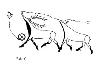 This drawing represents the mystical power of the bull Elk over the cow; the presence of the