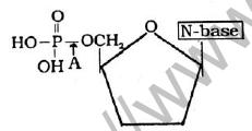 NEET Biology Biomolecules MCQs Set A, Multiple Choice