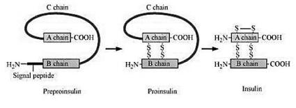NCERT Solutions Class 12 Biology Chapter 12 Biotechnology