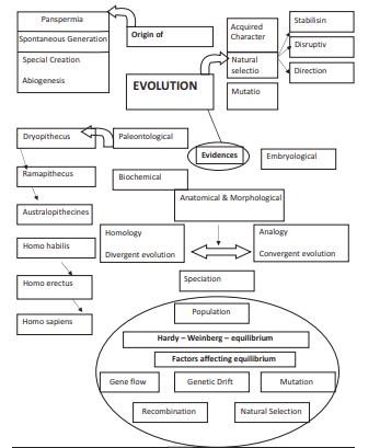 CBSE Class 12 Biology Evolution Concept map