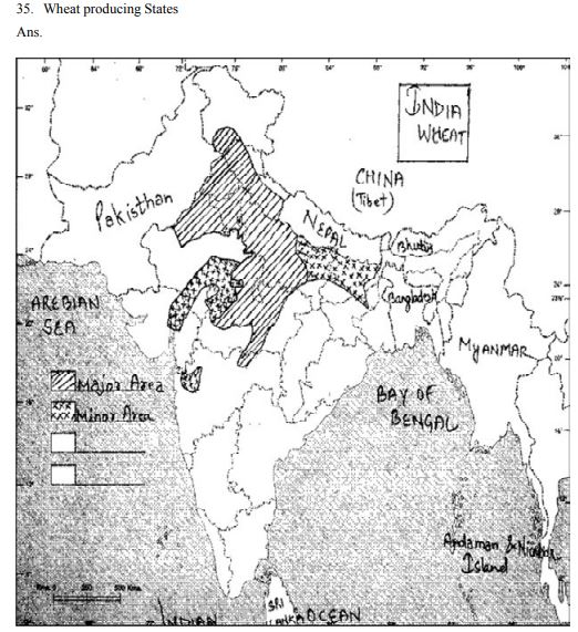 CBSE Class 12 Geography Map Wheat producing States