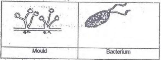 CBSE Class 8 Science Sample Paper Set K