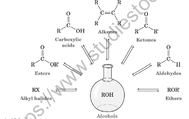 CBSE Class 12 Chemistry Alcohols Phenols And Ethers Board