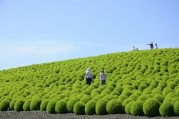 hitachi-seaside-park-japon9