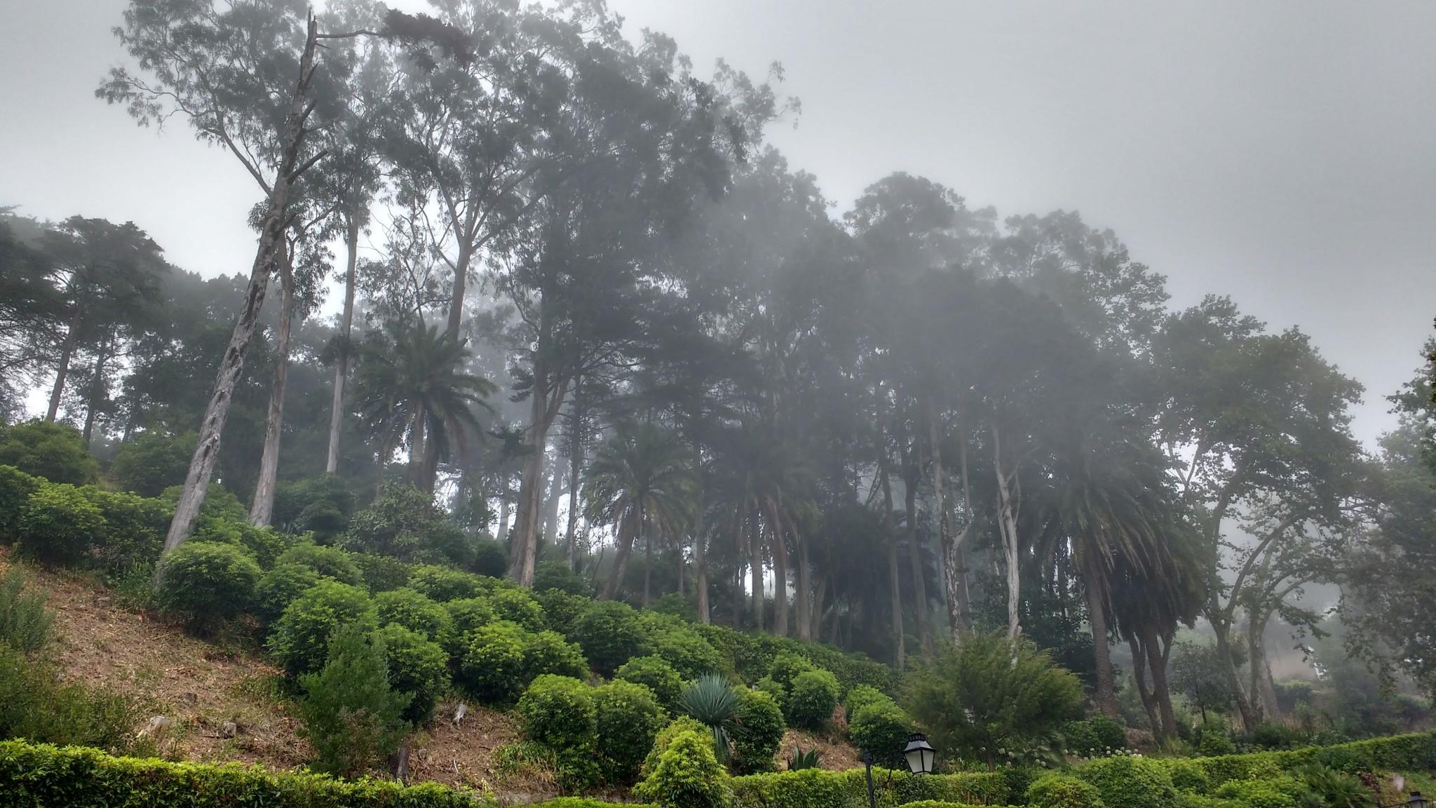 Le brouillard épais et humide donnait l'impression de se trouver quelque part en Amérique du Sud.