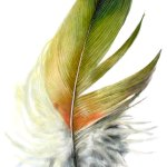 image of drawings of feathers