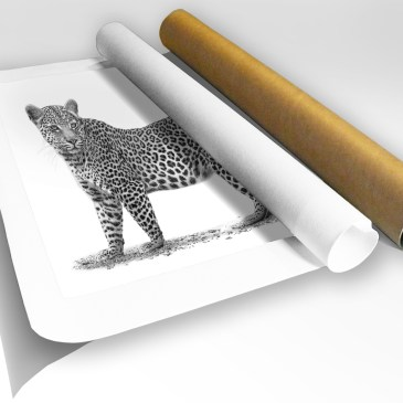 The Studio Art Gallery - Rolled Canvas - African Leopard