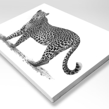 The Studio Art Gallery - Stretched Canvas - African Leopard