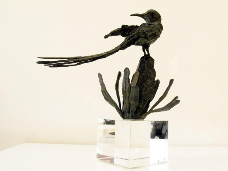 The Studio Art Gallery - Richard Gunston Sculptures - Long Tailed Cape Sugarbird Detail 4
