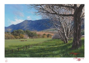 Andrew Cooper   The Studio Art Gallery - Cows Grazing Buitenverwachting Limited Edition Print