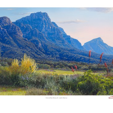 The Studio Art Gallery - Andrew Cooper - Kirstenbosch Gardens Limited Edition Print