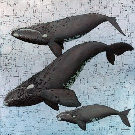The Studio Art Gallery - Whale Season by Marc Alexander