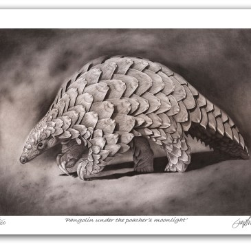 The Studio Art Gallery - Archival Print on Paper - Pangolin by Craig Ivor