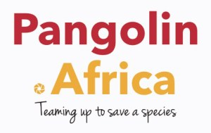 The Studio Art Gallery - Pangolin Africa Logo