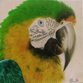 The Studio Art Gallery   2021 Mandela Day Block Art Exhibition   Colin Ruiters - Parrotdice