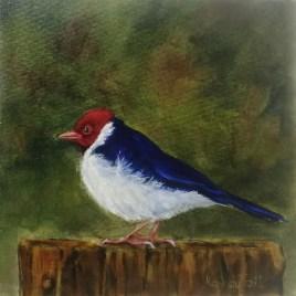 The Studio Art Gallery   2021 Mandela Day Block Art Exhibition   Kay Du Toit - Yellow Billed Cardinal