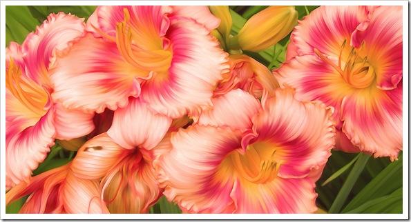 peachlilies2