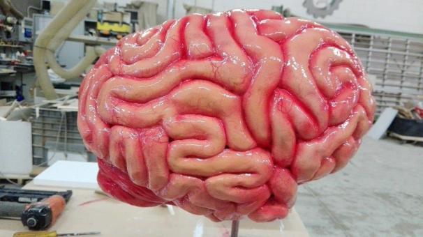 16-18 cervello