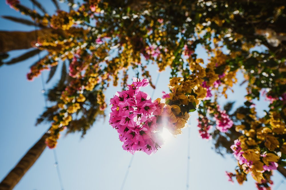 Villa Dalmacija flowers