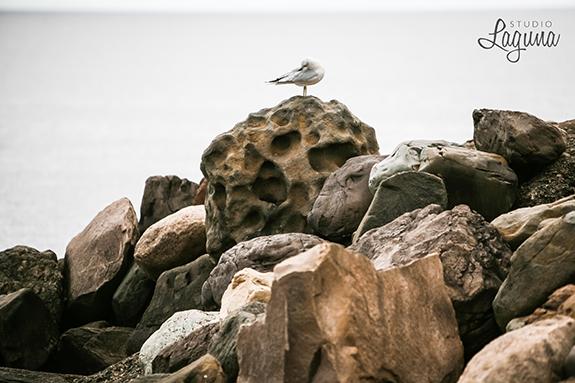 gatherbird