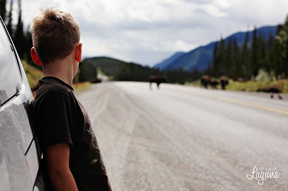 roadtrip018