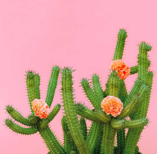 Lil Plot Kaktusbaum Anzuchtset