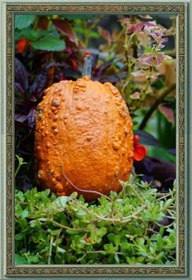 Knucklehead Pumpkin
