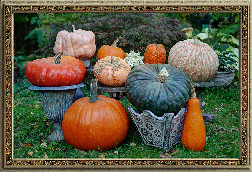 Portrait of the Pumpkins