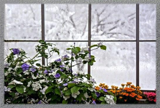 Colored Winter Window in Lamberton Conservatory