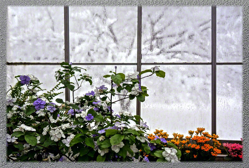 Colored Winter Window in Lamberton Conservatory