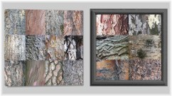 Montage of Arboreal Surfaces