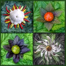 The first in a series of montages built from combinations of Celestial Vegetable Stars and Suns. As the Edible Universe took form, these were the first four stars to shine: Star of Red Lightning, Star of Green Zebra, Sol Picante and Star of Heritage Beans