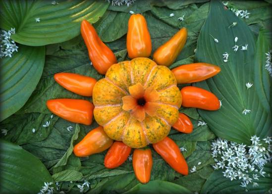 """""""Pumpkin Pepper Star"""". A miniature pumpkin survivor of the previous year with rays of Sweet Pepper """"Tangerine Dream"""", Black Eyed Susan vine flower core. A sky of Royal Standard and other Hostas and Jamaican Callaloo (Amaranth) and nebulosity of Garlic Chive Flowers."""