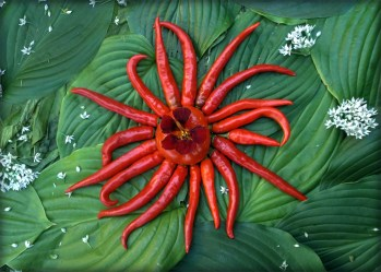 """This Sun shines within the larger Stellar Vegetable Cluster. The star has rays made from Cayenne Pepper and a core of Black Velvet Nasturtium resting on a """"Consoluto Genovese"""" Tomato. It lives where space consists of the leaves of the August Lily and Hosta """"Royal Standard"""" as well Jamaican """"Callaloo"""" (Amaranth) and where the dust of Stellar Nebulosity is the flower of the Garlic Chive."""