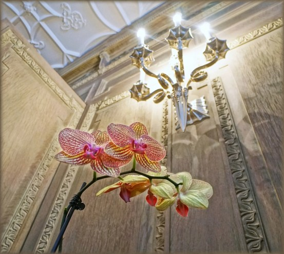 Low angle view of Phalaenopsis sp. and Chandelier in George Eastman's Dining Room