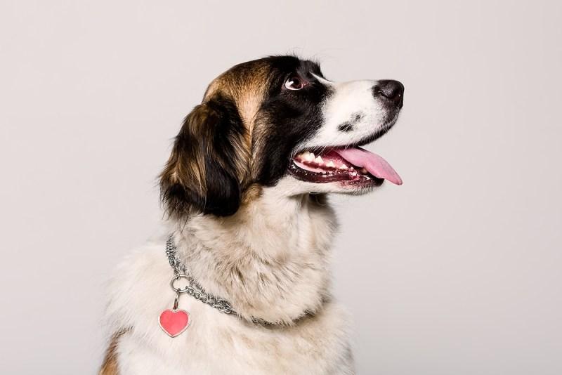 Huisdieren fotografie door Studio Momentum