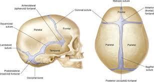 suture craniche
