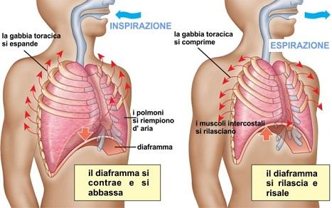 respirazione-polmoni-diaframma_b_