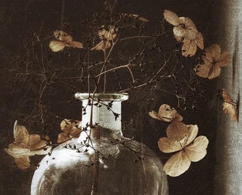 Fles met hortensia