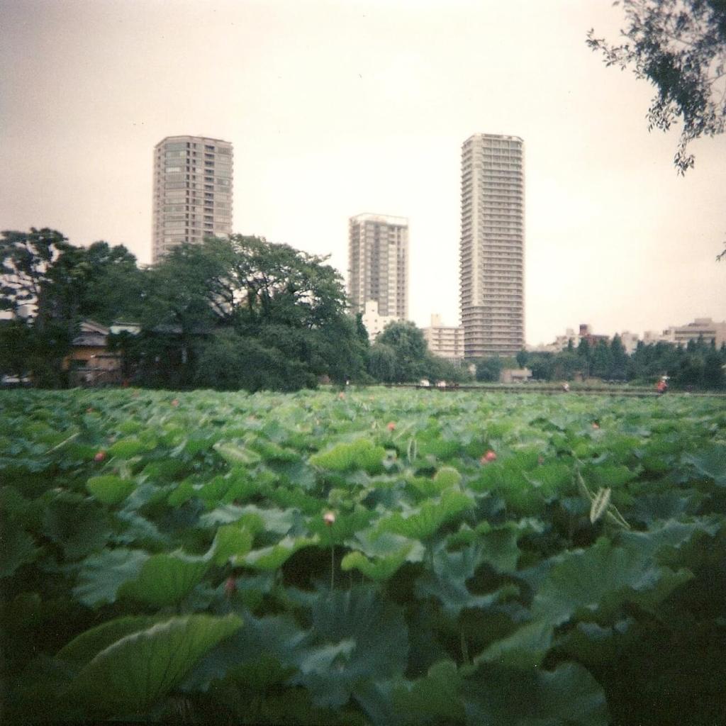 Le lac aux lotus