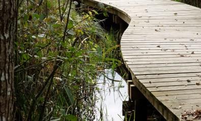 A la découverte de la zone humide des Rinceaux