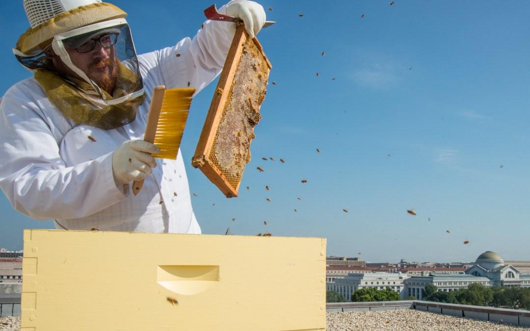 La Chose Commune #6 La protection des insectes 2/2