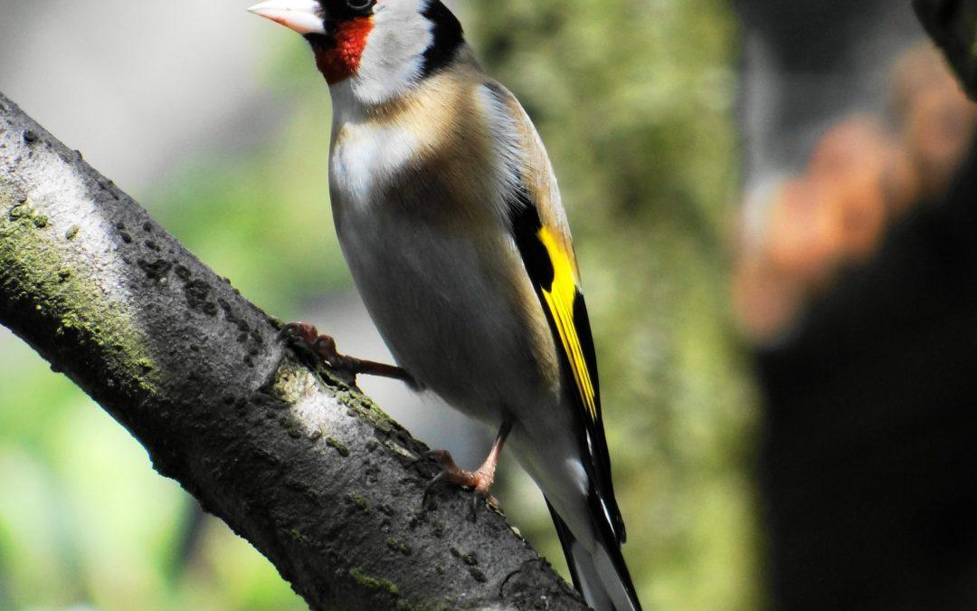 La Chose Commune #16 : La protection des oiseaux avec la LPO 41
