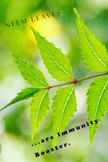 Neem leaves home remedies for immunity boosters