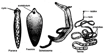 In 1969, an American ecologist Robert Whittaker classified